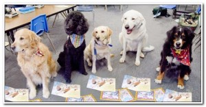 Read to a Dog @ San Rafael Public Library | San Rafael | California | United States