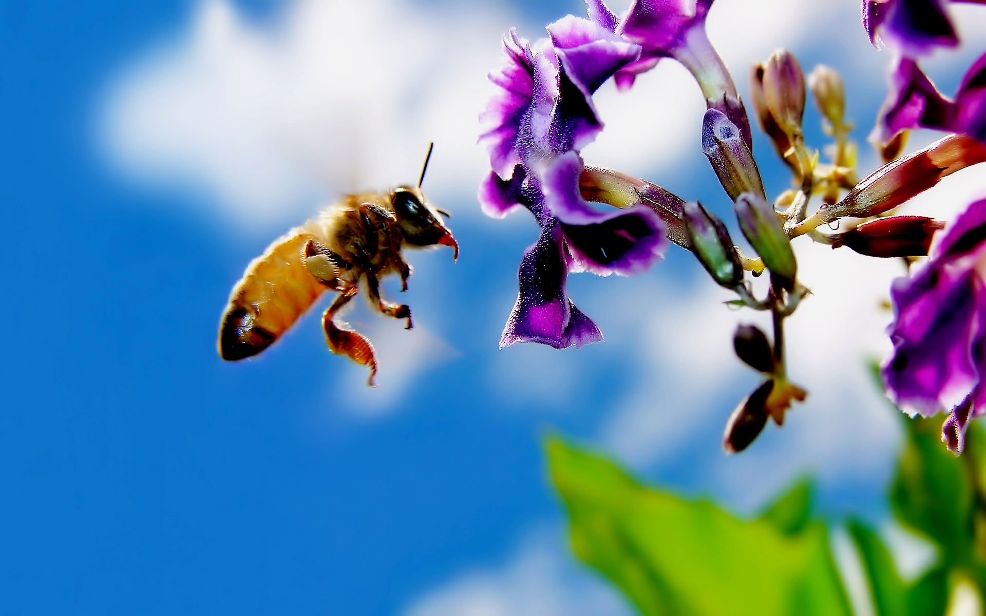 The Secret Lives of Bees - Marin Master Gardeners @ Library Meeting Room | San Rafael | California | United States