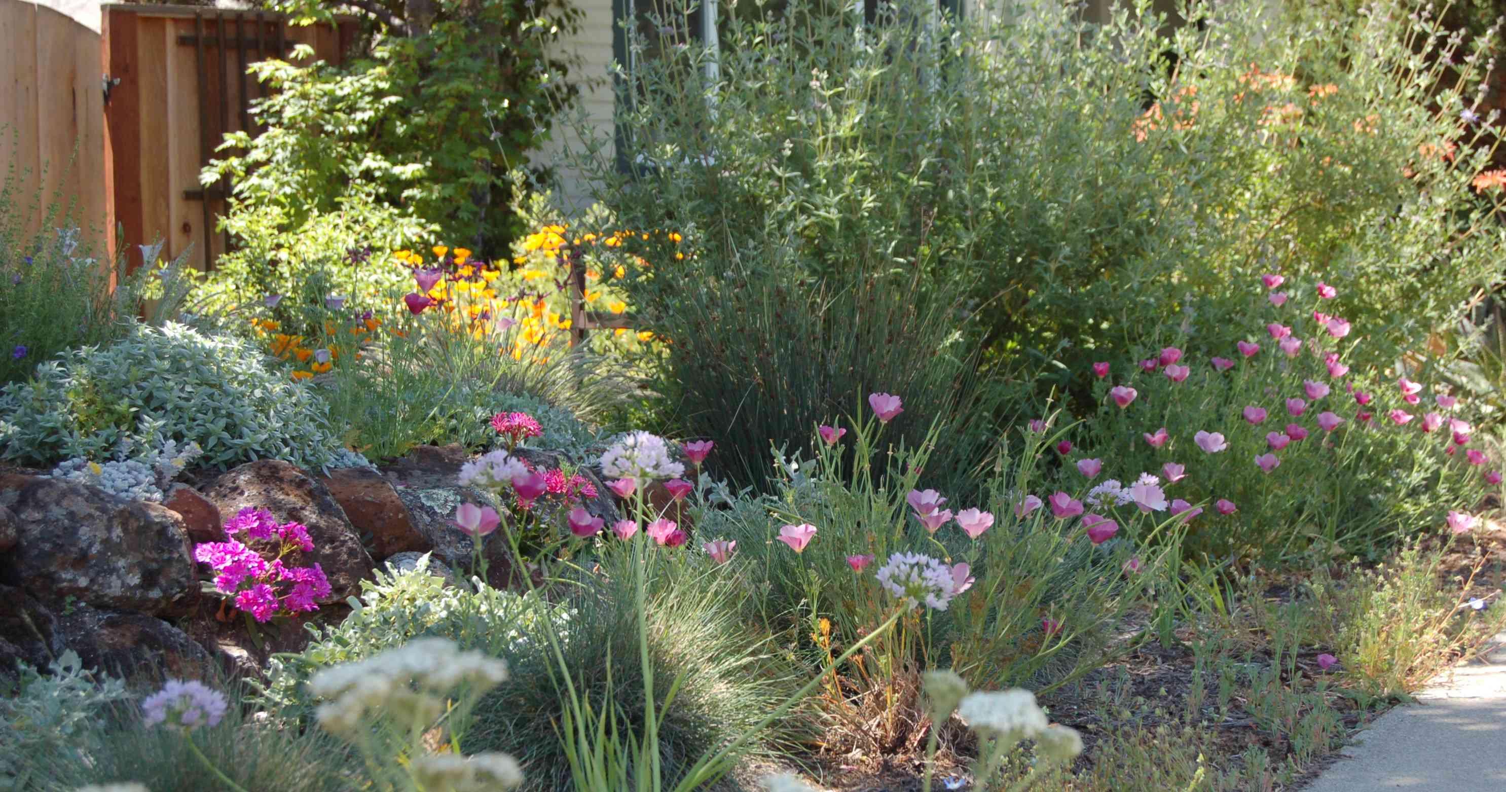 Marin Master Gardeners: Gardening with California Natives @ Library Meeting Room | San Rafael | California | United States