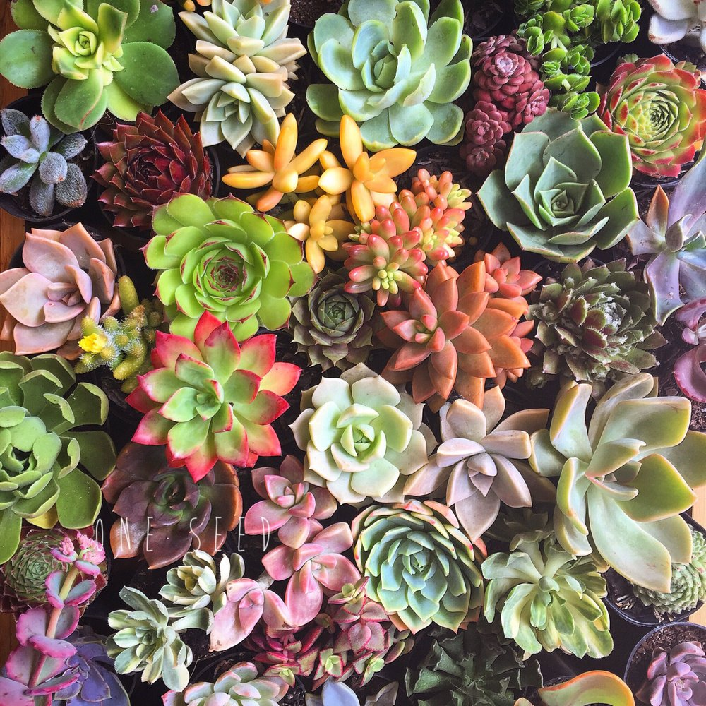 Marin Master Gardeners - About Succulents @ Library Meeting Room | San Rafael | California | United States